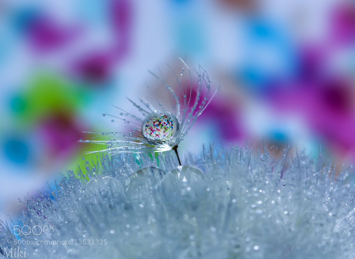 Photograph Colors by Miki Asai on 500px