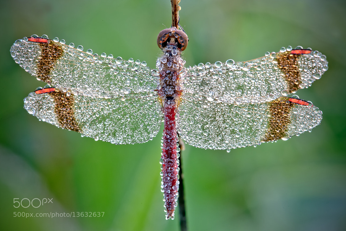 Photograph the jewels by David Chambon on 500px