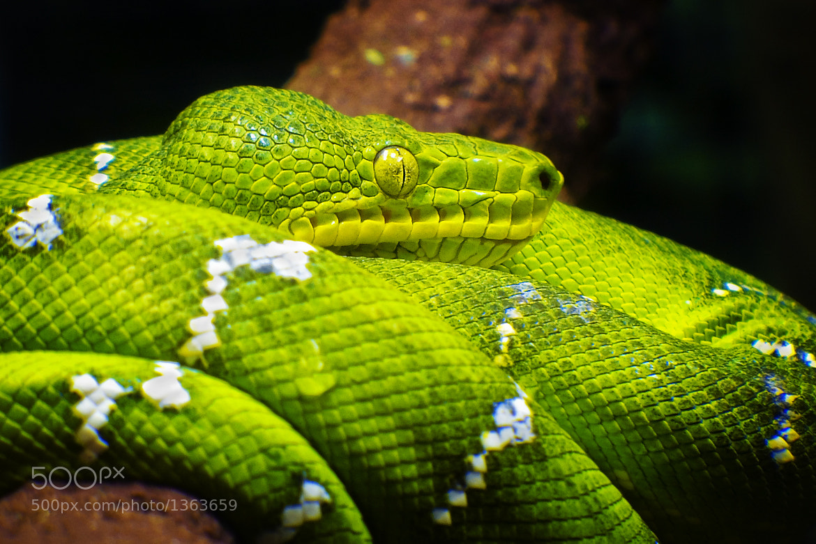 Photograph My Pretty Little Greenie by Andi Noviandry on 500px