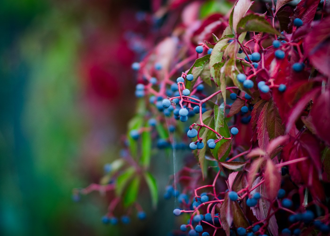 Photograph My Blueberry Nights by Anne Rosenberger on 500px