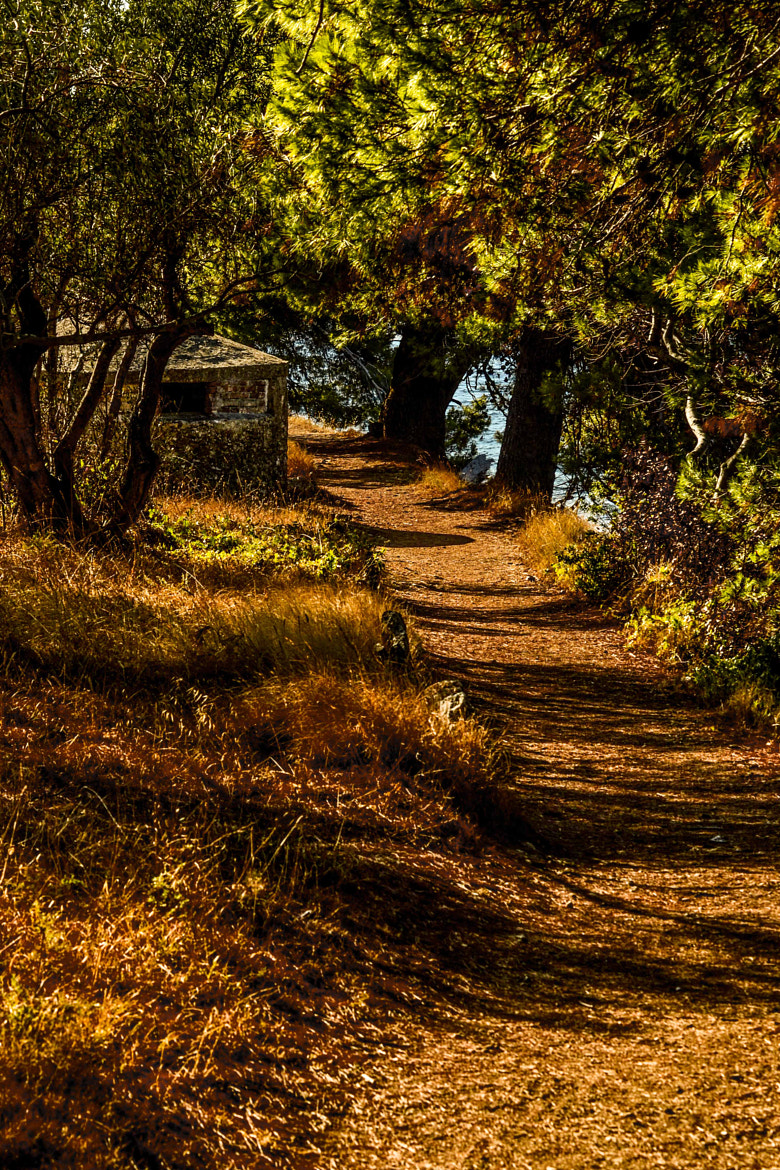 Photograph Path by LH Padovan on 500px