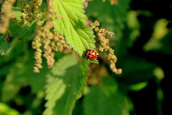 Photograph Ladybug by Martijn Scheepers on 500px