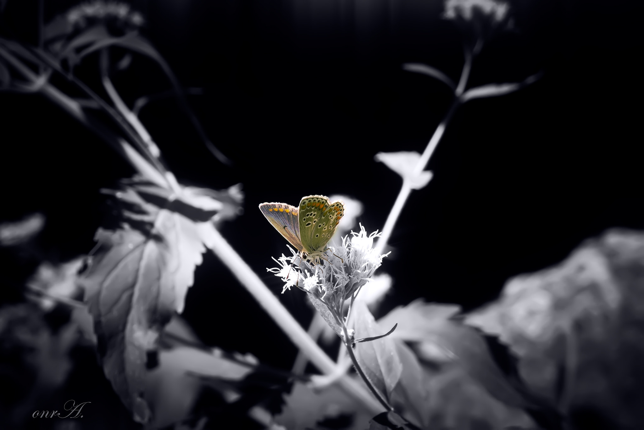 Photograph butterfly.. by onr A. on 500px