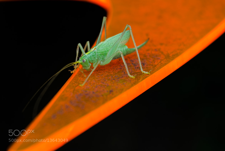 Photograph On Orange by Henry Buttchereit on 500px