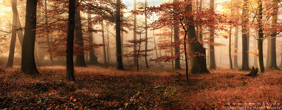 Mystic Autumn by Martin Krajczy on 500px.com