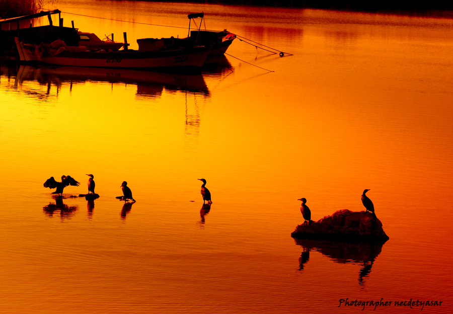 Photograph **--** by Necdet Yasar on 500px