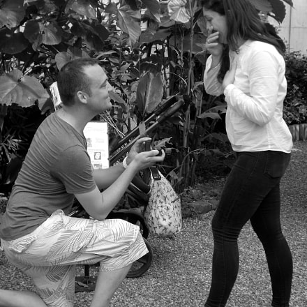 Proposal, Fujifilm FinePix SL245