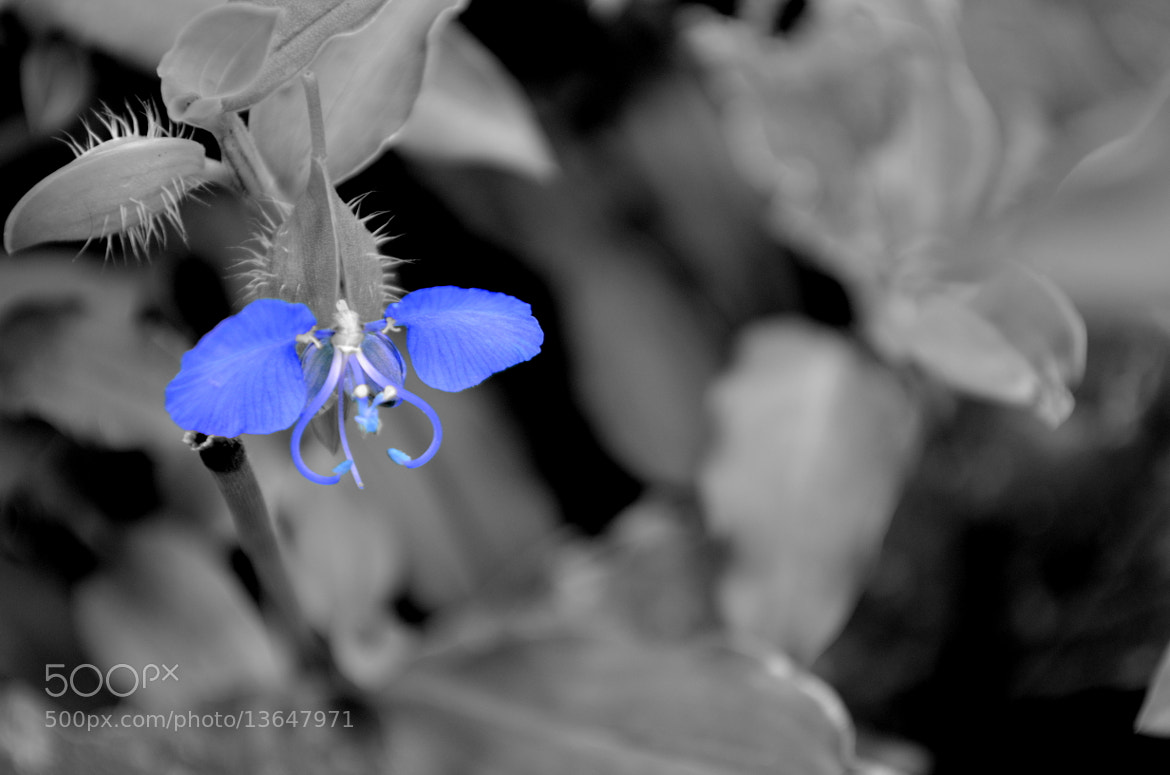 Photograph Bluee by Aaditya Kothari on 500px