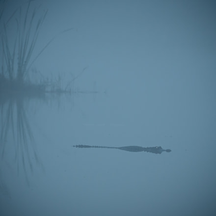 Menace in the Mists, Nikon D4S, AF-S VR Zoom-Nikkor 200-400mm f/4G IF-ED