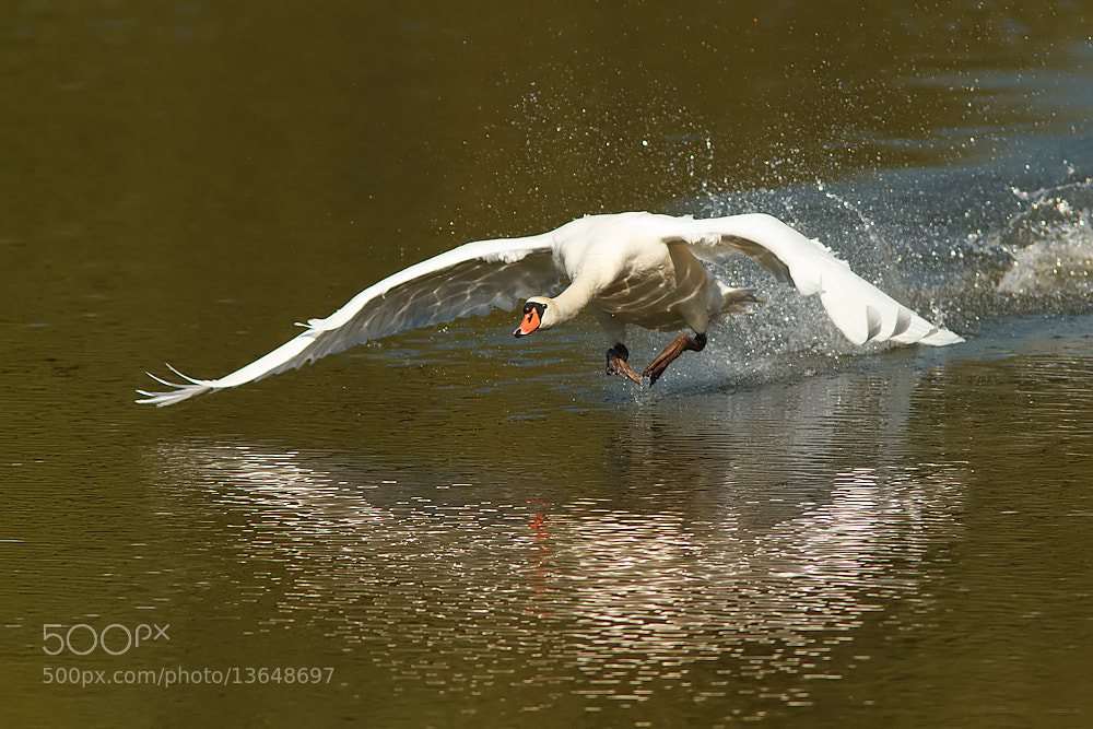 Photograph Walking on water by Tom  Kruissink on 500px
