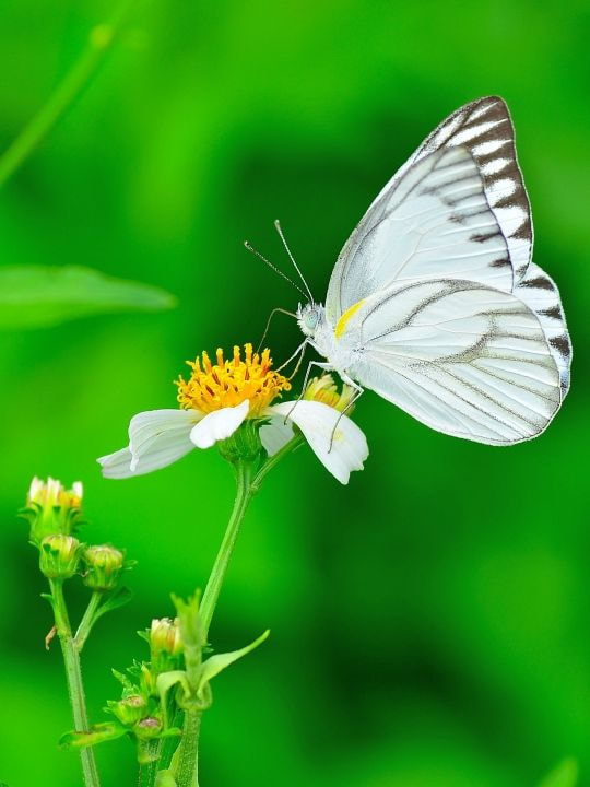 Photograph White wings by Dikky Oesin on 500px