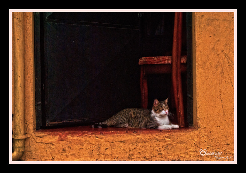 Photograph Cats Diary: Guardina by PandaWicked  on 500px
