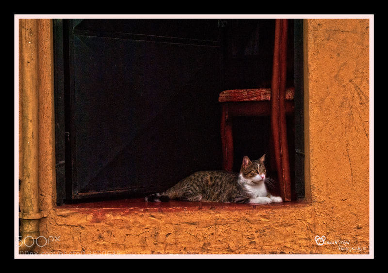 Photograph Cats Diary: Guardina by Miel  Mora on 500px