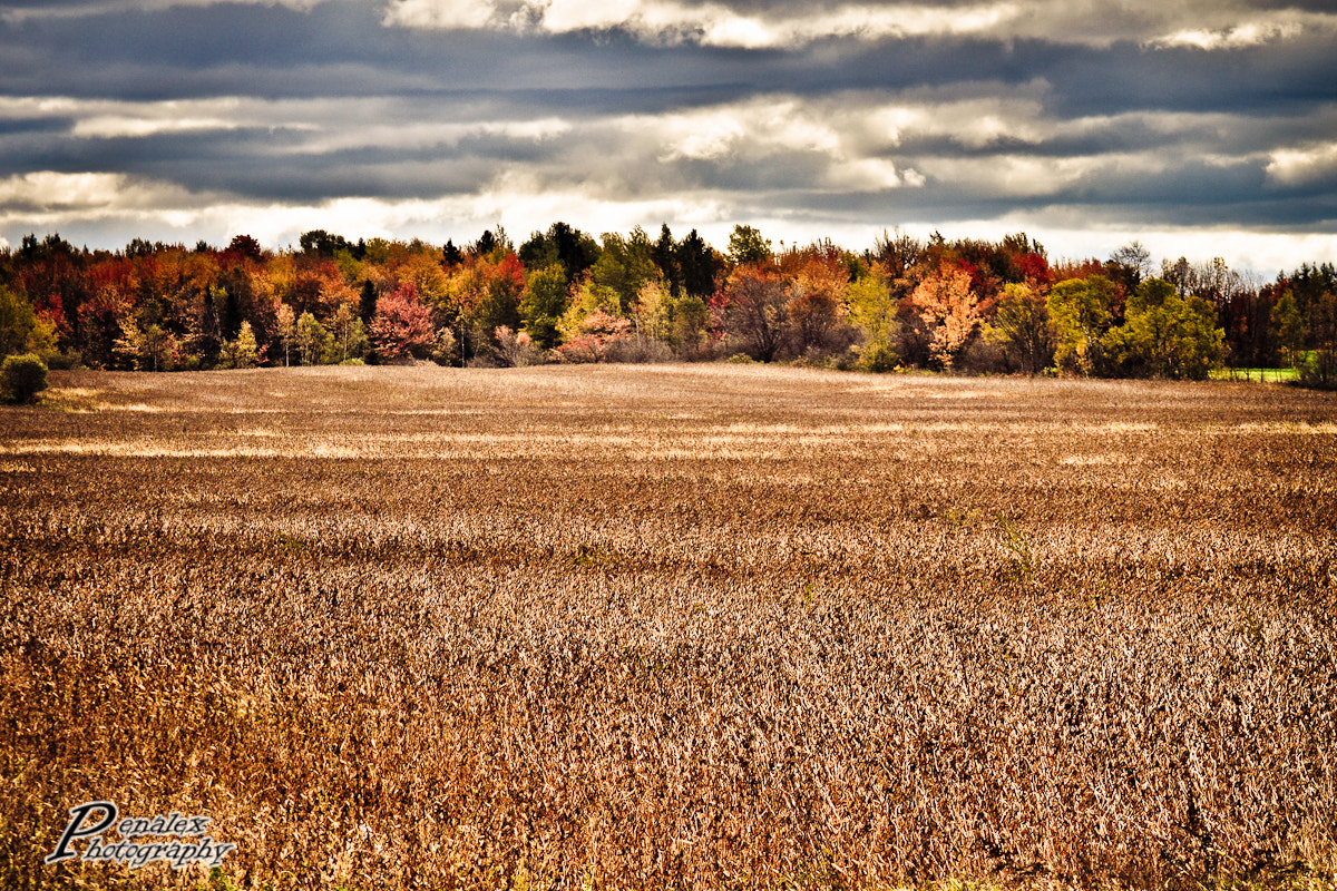 Photograph The fields by Alex Pena on 500px