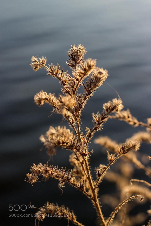 Photograph Plants by Vladimir Tasevski on 500px