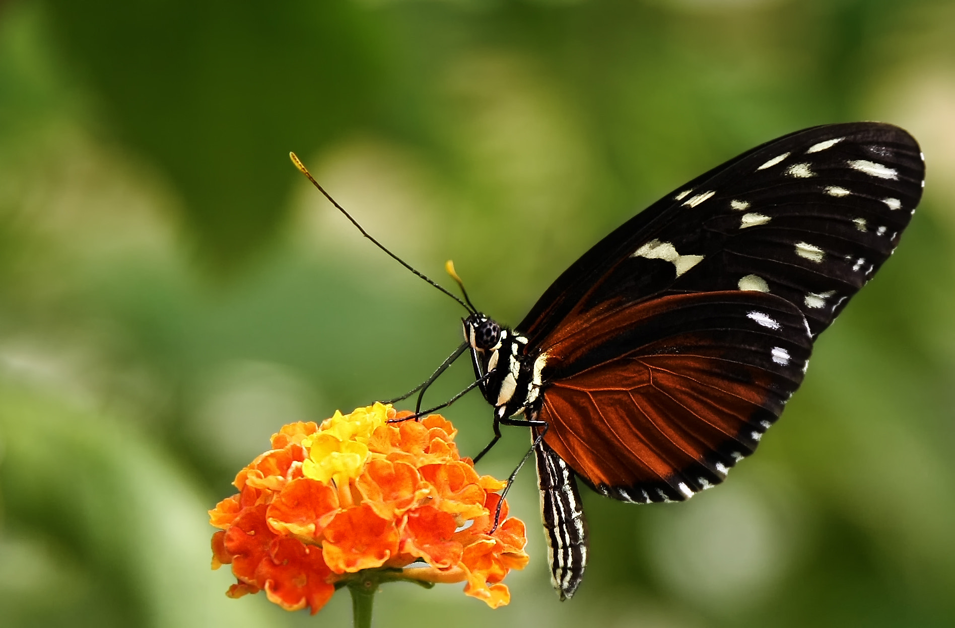 Photograph butterfly by jan kitel on 500px