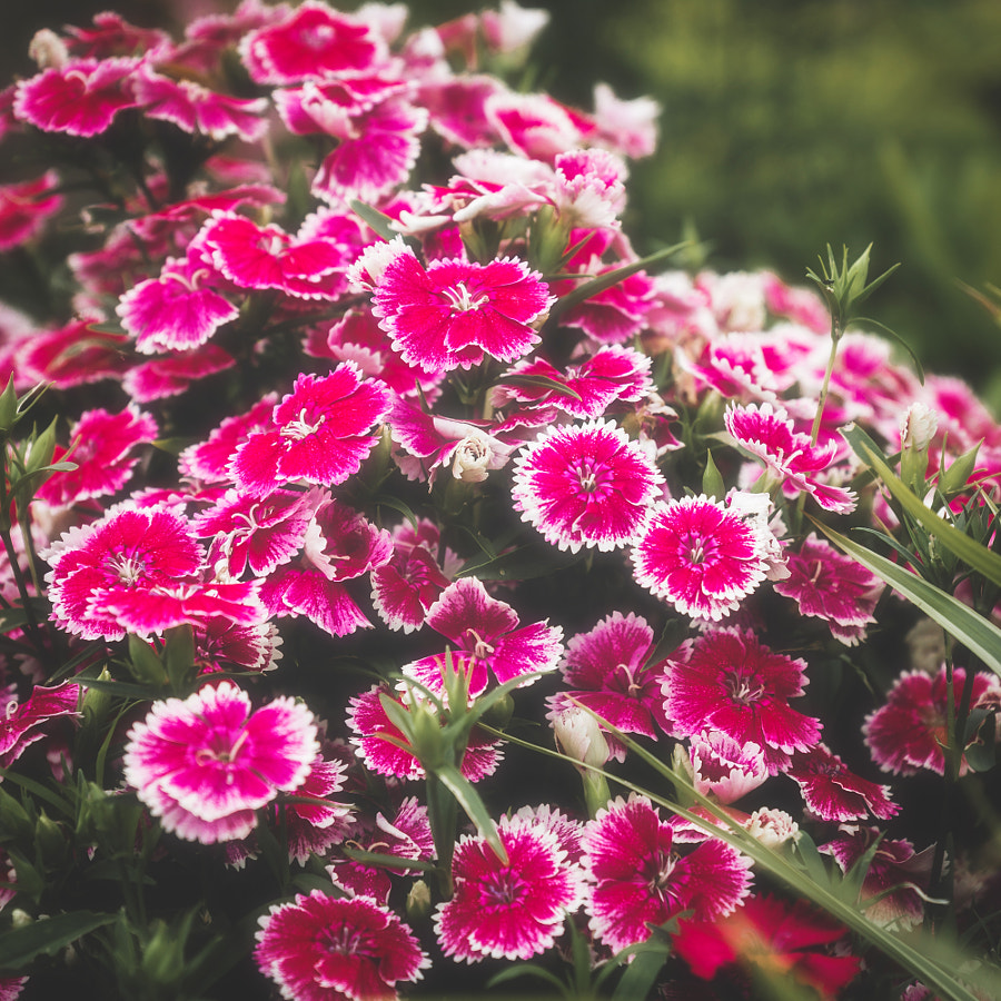 _Spring I