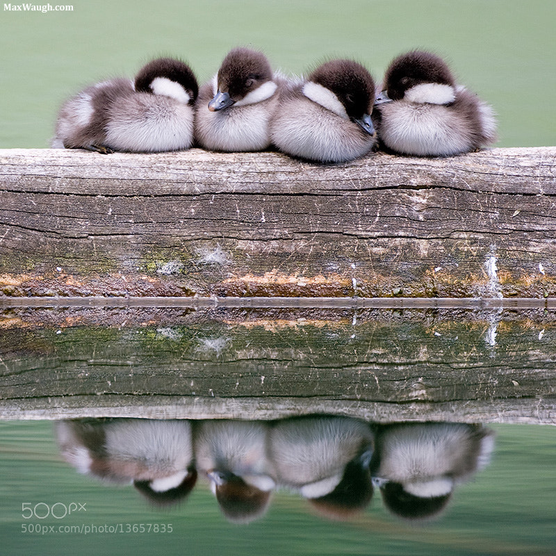 Photograph Siesta by Max Waugh on 500px