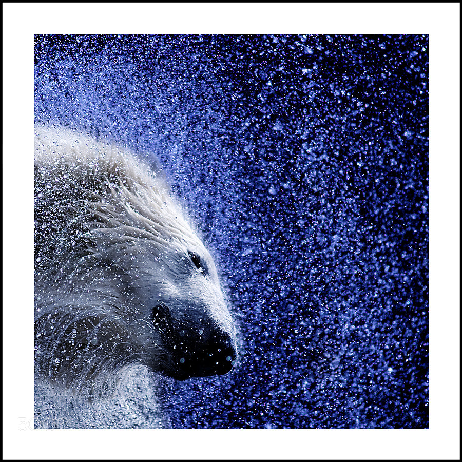 Photograph Polar by Jaap Verhoeven on 500px