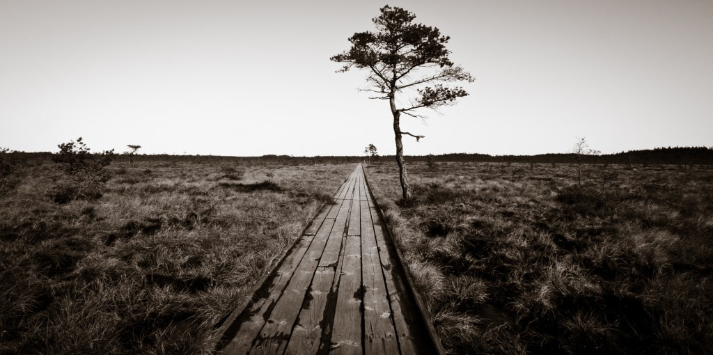 Photograph lonely by Linus Englund on 500px