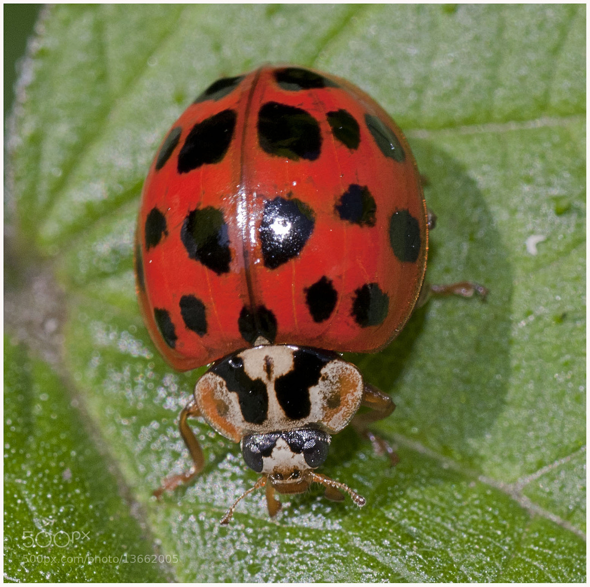 Photograph Lady Bird by Jamie Hyde on 500px