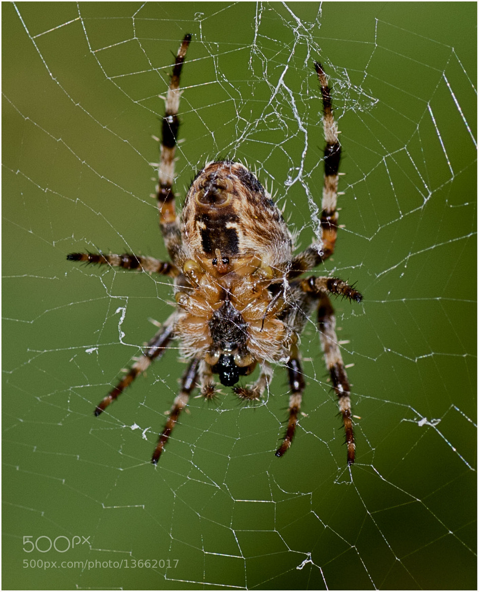Photograph Insey Winsey Spider by Jamie Hyde on 500px