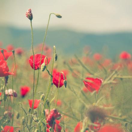 ...poppy...