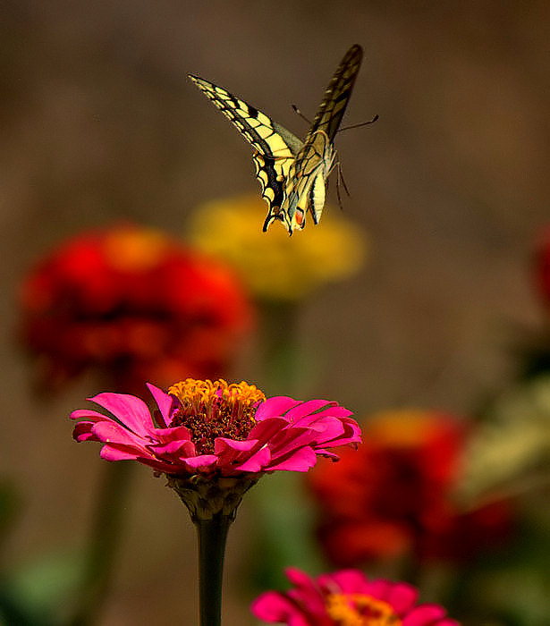 Photograph Time to fly by Şerif Arslan on 500px