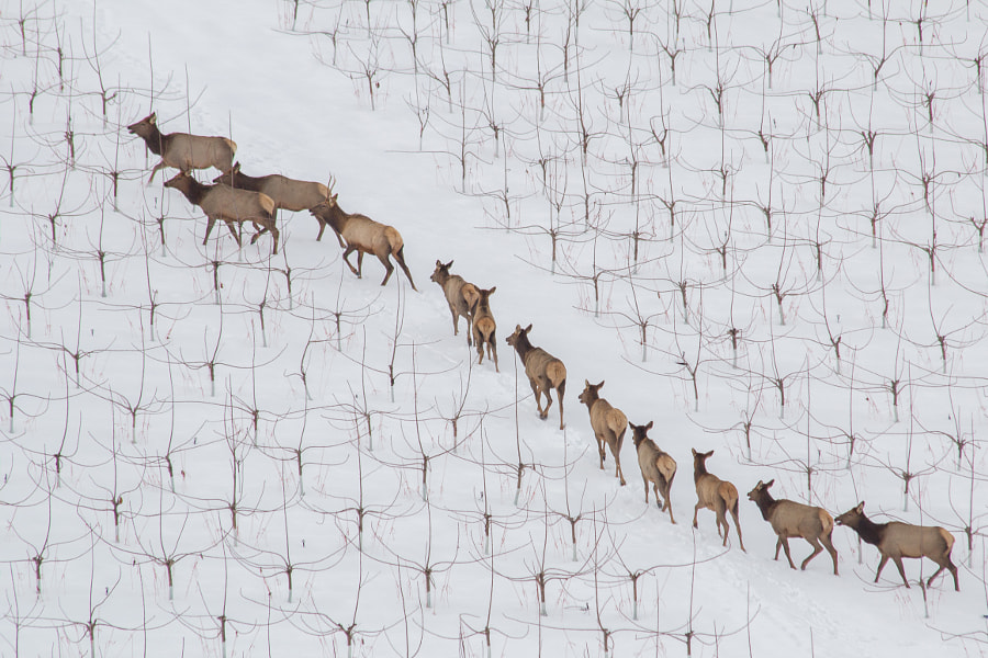 Follow the Herd by Mark Price on 500px.com
