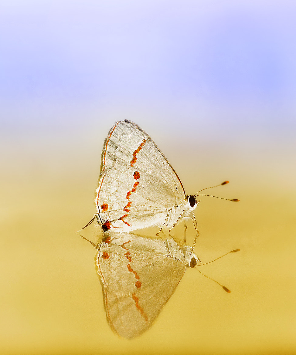 Photograph papillon by Valter Patrial on 500px