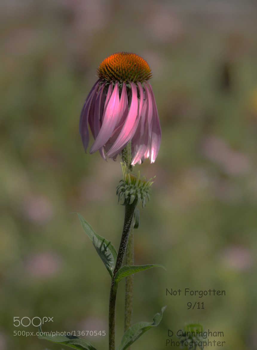 Photograph Nine Eleven by Dorothy Cunningham on 500px