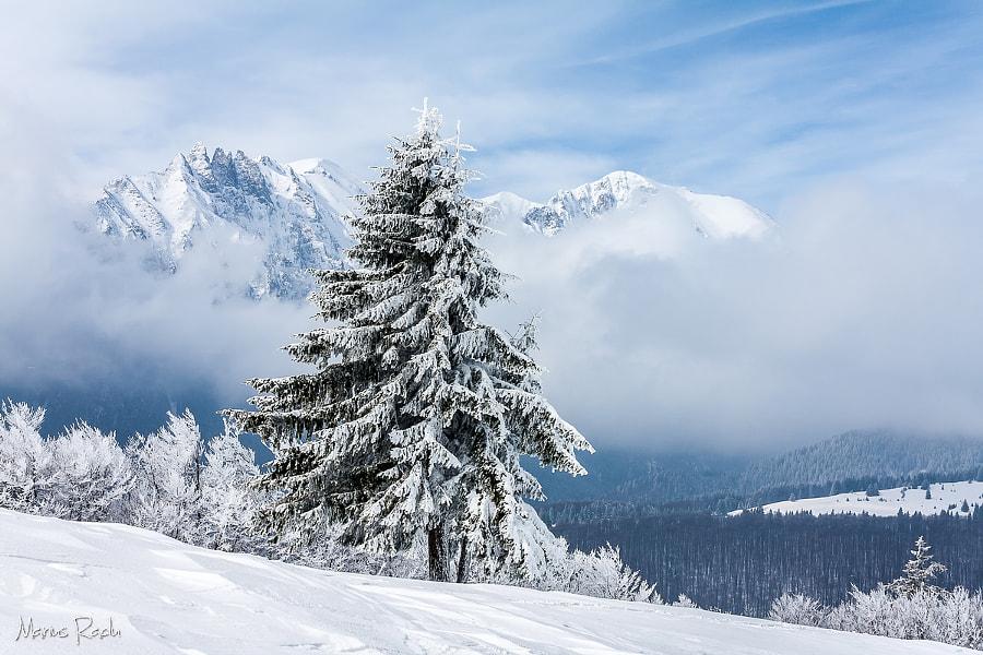 Fir tree and snowy misty mountains, автор — Marius Radu на 500px.com
