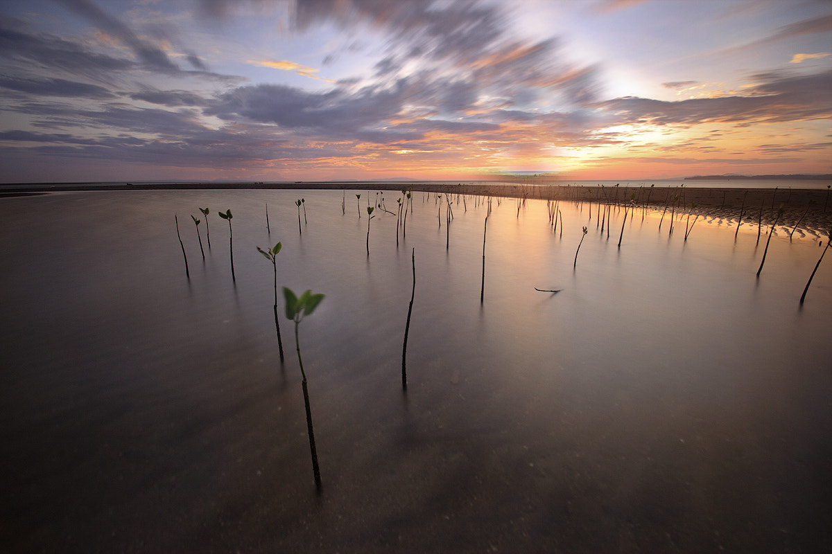 Photograph Bringing home the ashes by Dax Cabredo on 500px