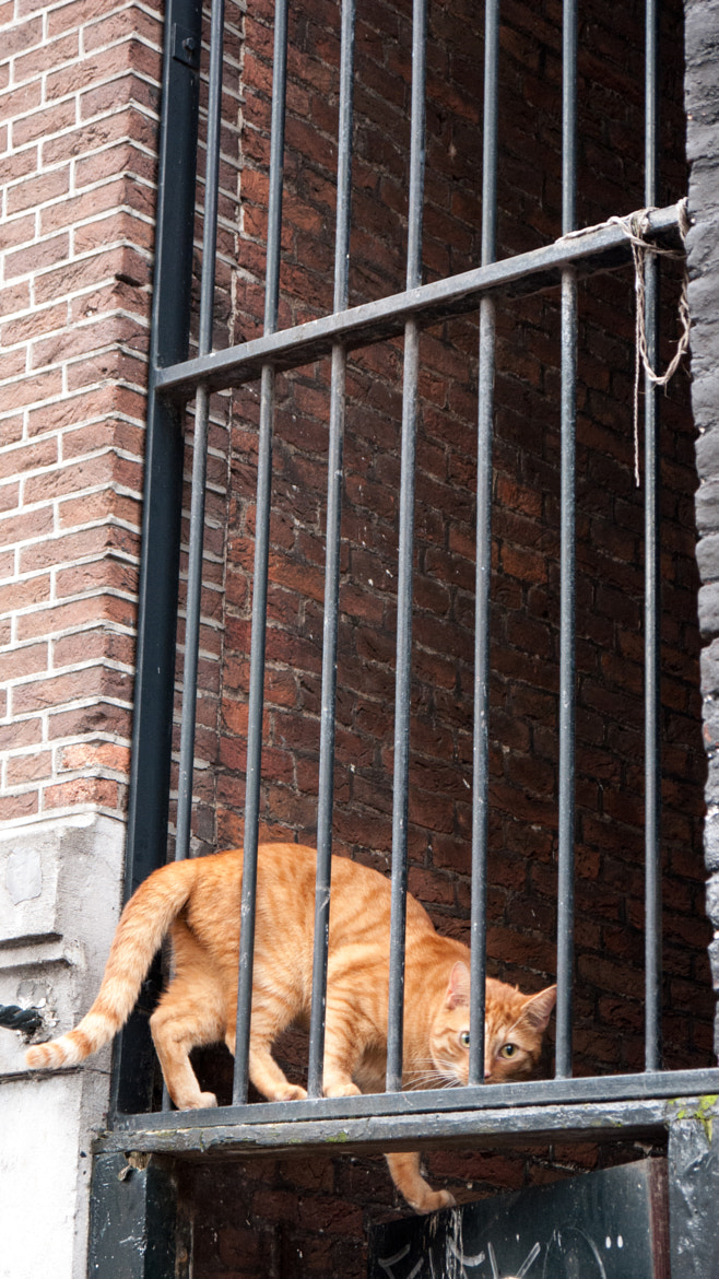 Photograph Red Dutch Cat by Flor Lewis on 500px