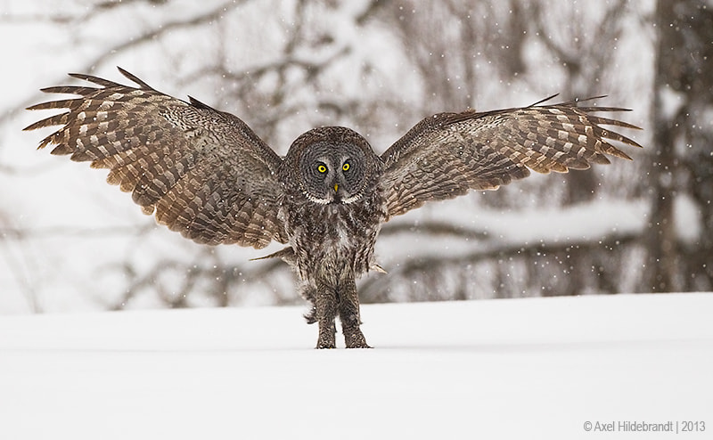 Stop! by Axel Hildebrandt on 500px.com