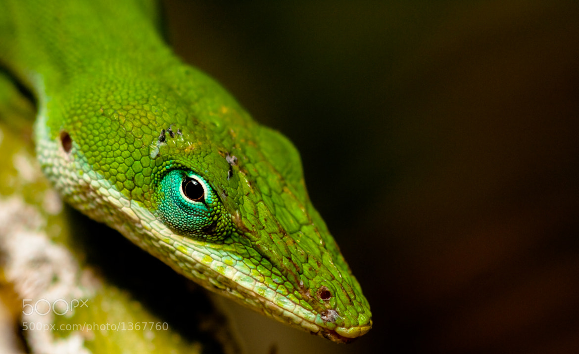 Photograph The Turquoise Eye by Phillip Simmons on 500px
