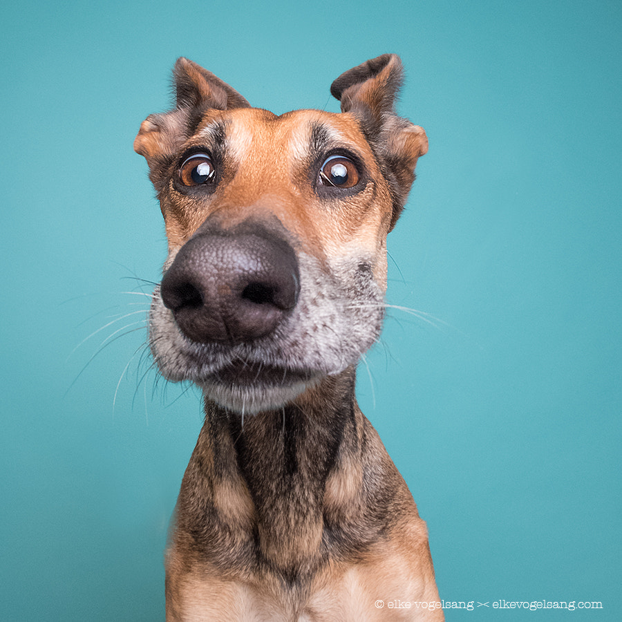 The world is going to pieces by Elke Vogelsang on 500px.com