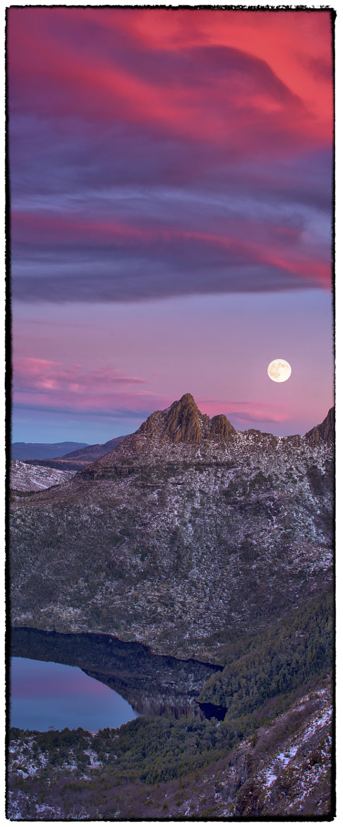 Photograph Das Lila Lied (The Lavender Song) by Timothy Poulton on 500px