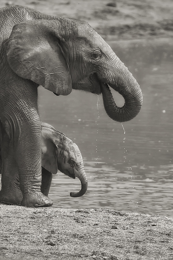 Photograph At The Waterhole by Mario Moreno on 500px