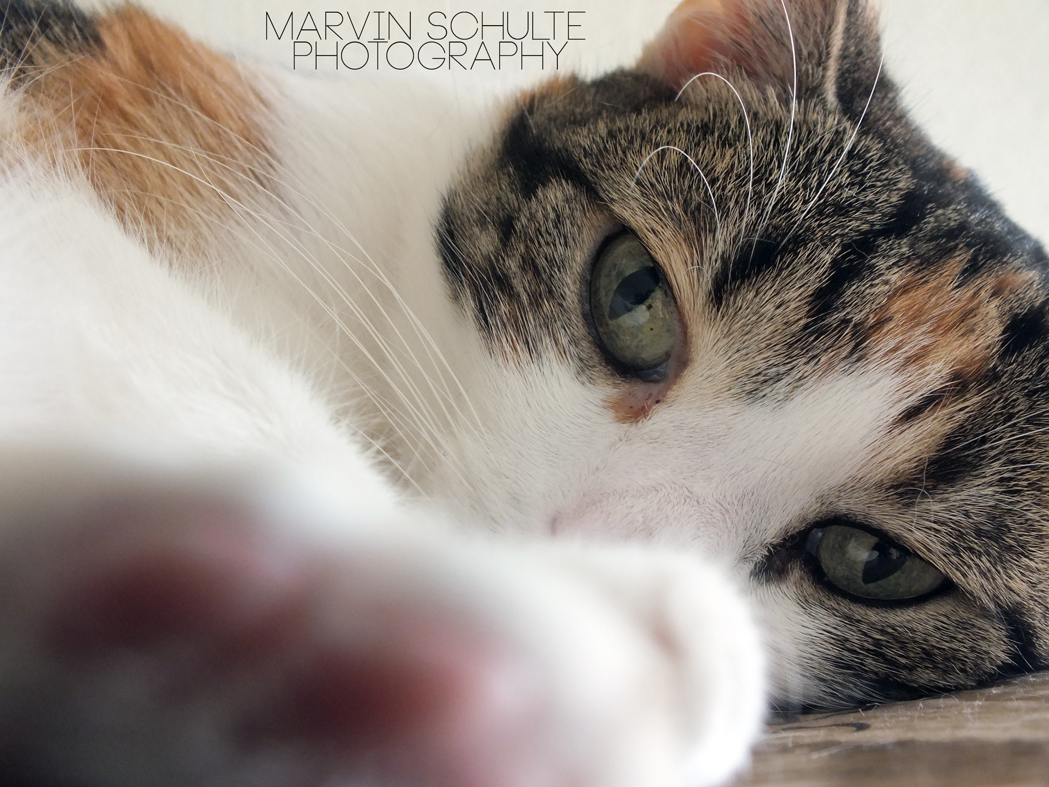 Photograph The cat of my girlfriend.  by Marvin Schulte on 500px
