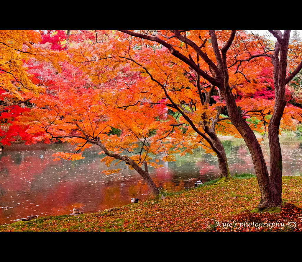 Photograph Secret garden by Kyle Lin on 500px