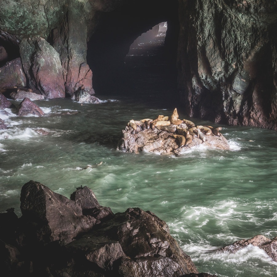 _sea lion caves, OR