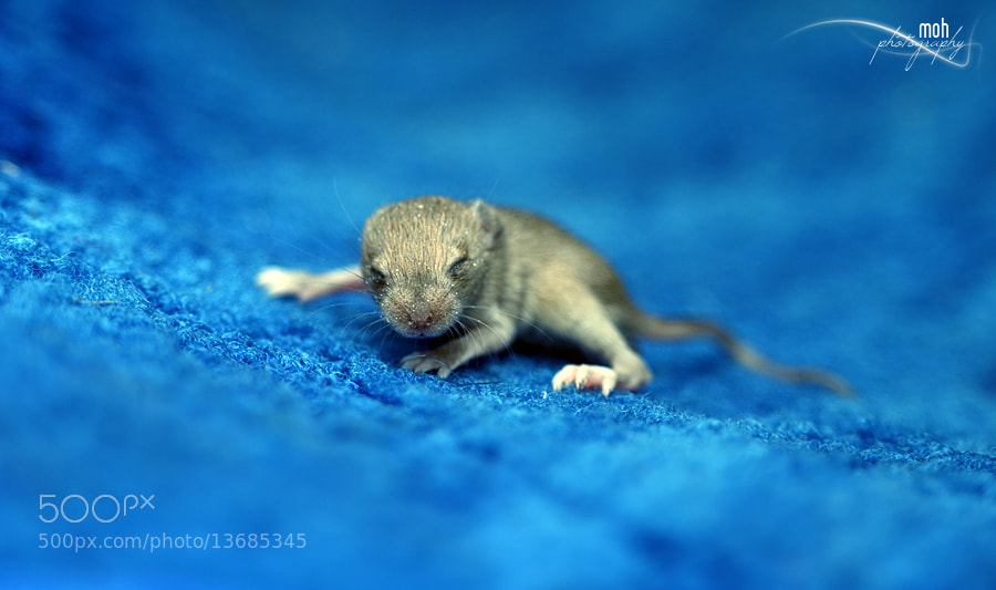 Photograph Newly born Stuart Little by Mohan Duwal on 500px