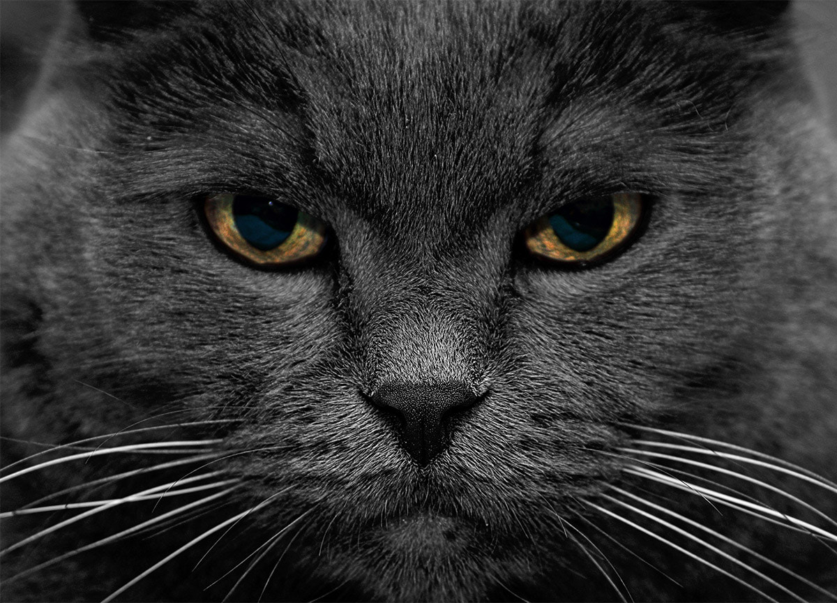Photograph stern look by Anton Shepenkov on 500px