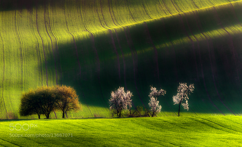 Photograph verdant by Piotr Krol on 500px