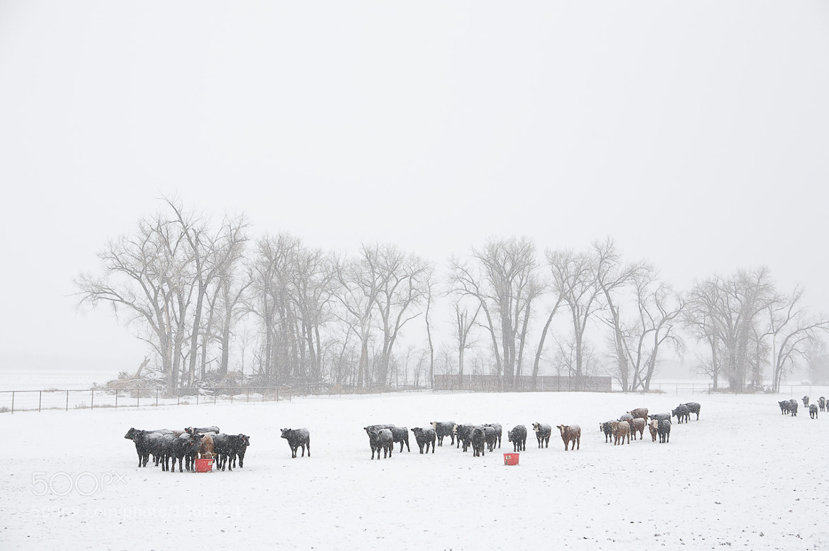 Photograph Price Farms by Mathieu Young on 500px