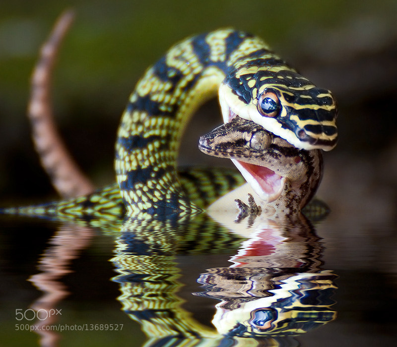 Photograph Reflection of death  by Dr. Green on 500px