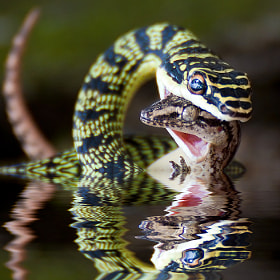 Reflection of death  by Dr. Green (Kittikun)) on 500px.com