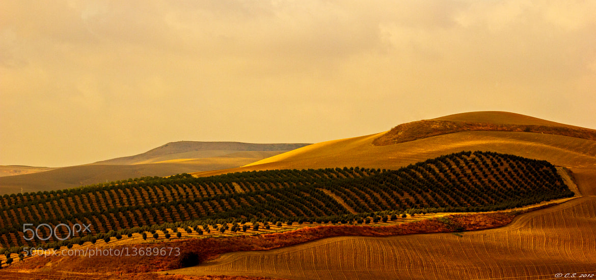 Photograph Landscape Of Andalusia I by Christian Seiffert on 500px