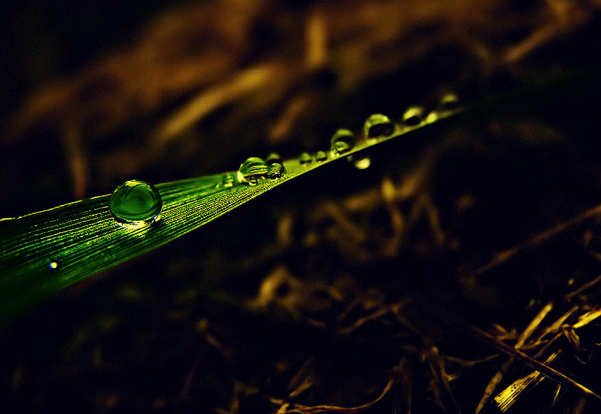 """Photograph Miss """" Drop """" by EMERALD WAKE © on 500px"""